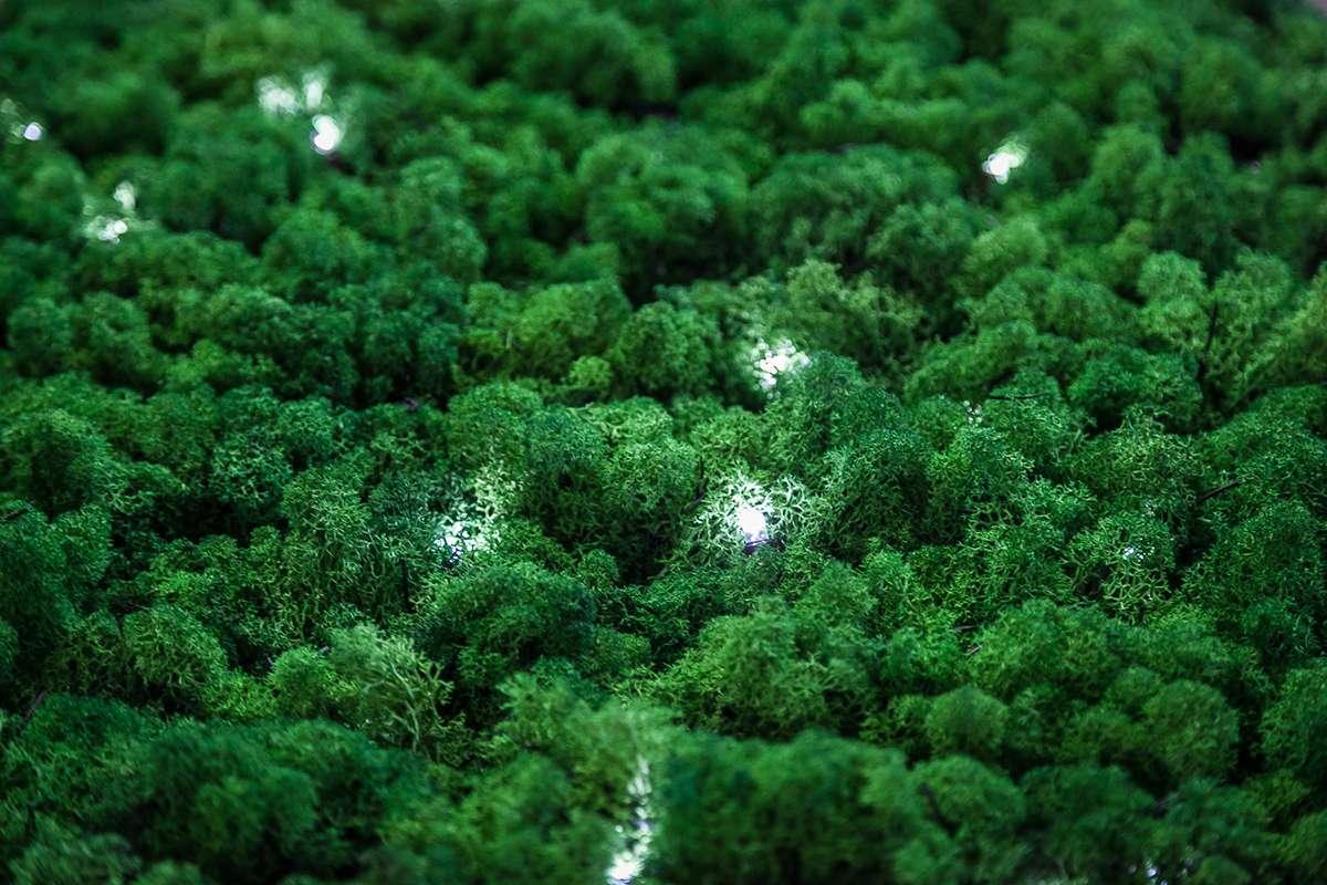 Lichene vegetale decorazioni natale