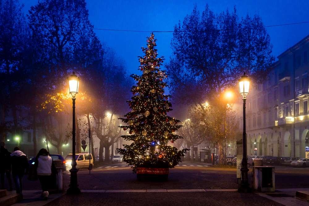 Gucciu0027s Christmas Trees   Zenone Christmas Specialist